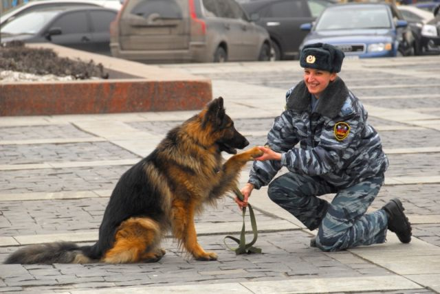 Собака дает лапу женщине