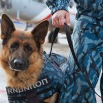 Собака на службе у человека: семь отличных пород