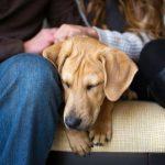 Чем опасен токсокароз у собак
