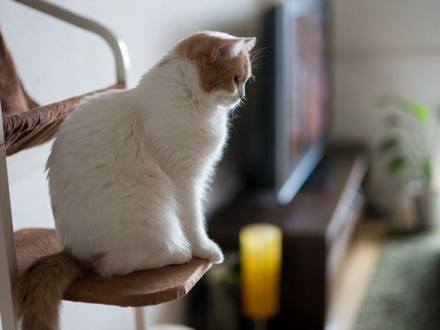 Кошка смотрит с высоты