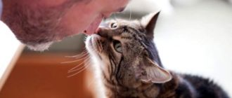 Кот нюхает мужчину