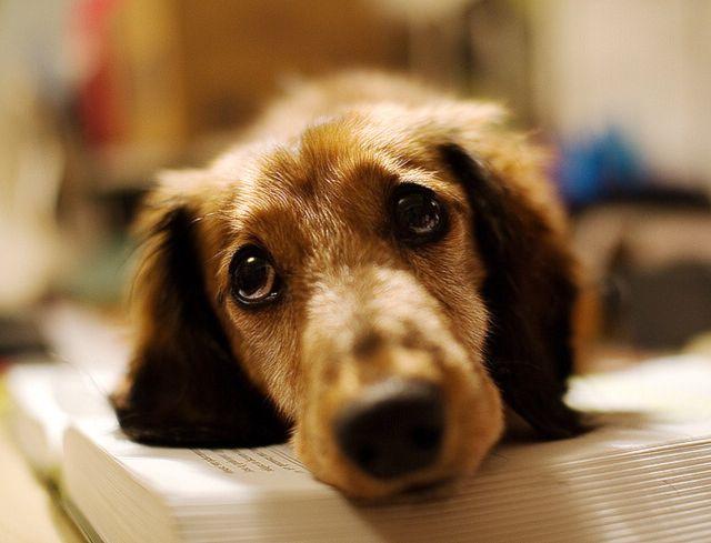 Пес лежит на подстилке