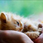 10 причин запора у котенка