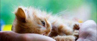 Котенок лежит на руках