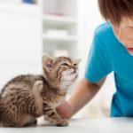 Как быстро и безопасно вывести блох у котенка