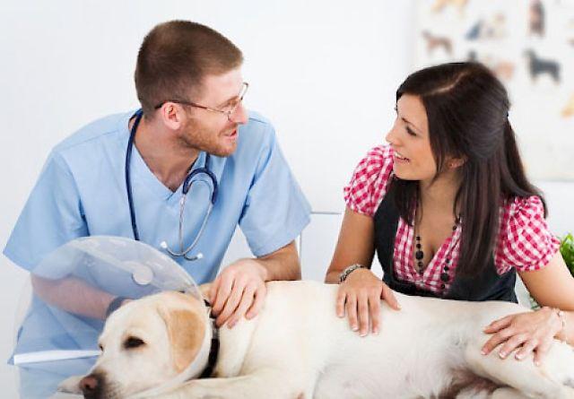 Женщина с собакой у врача