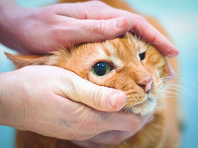 Голова кота в руках
