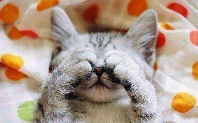 Котенок закрыл лапами глаза