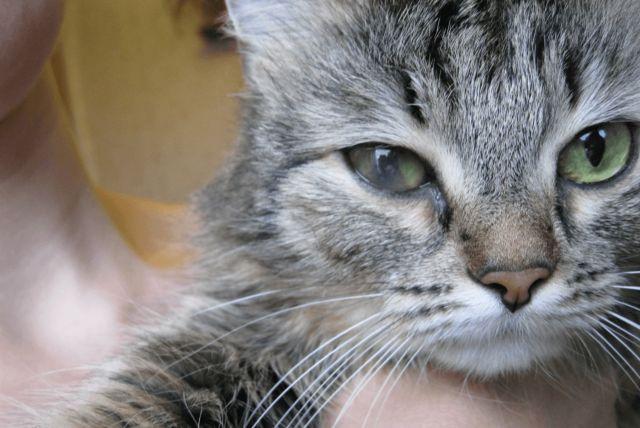 Кот недовольно смотрит