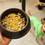 Можно ли добавлять яйца в рацион собаки