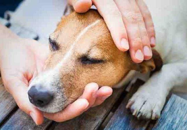 Человек держи голову собаке