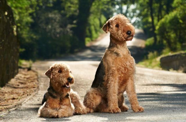 Два пса