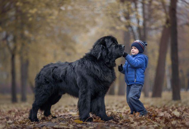 Мальчик с собакой в лесу
