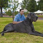 Обзор самых больших пород собак