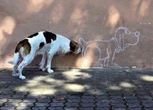 Пес нюхает стену