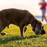 Выделения из петли собаки: норма и патология