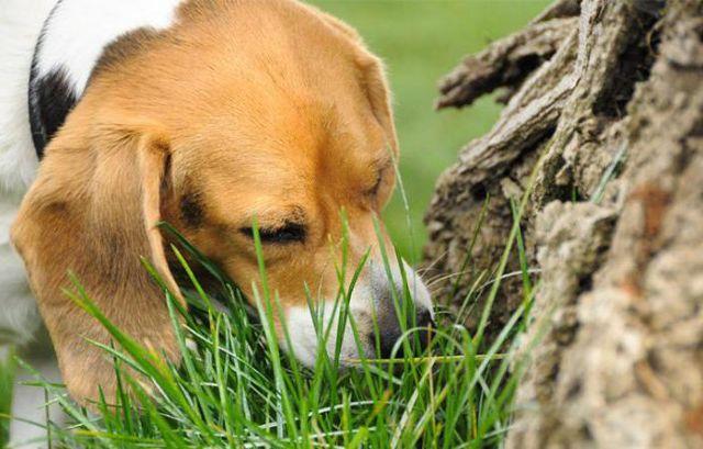Собака нюхает дерево