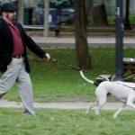 Собака ест кал: причины и способы борьбы