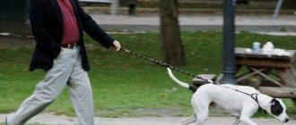 Хозяин выгуливает собаку