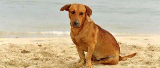 Пес сидит на песке