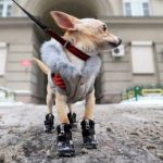 6 причин, по которым собака лижет свою мочу