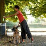 Что делать, если у собаки кал со слизью