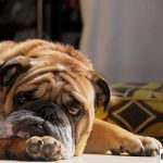 12 причин тошноты слизью у собак