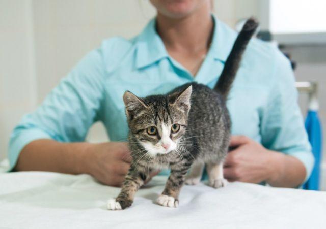 Котенок уходит от врача