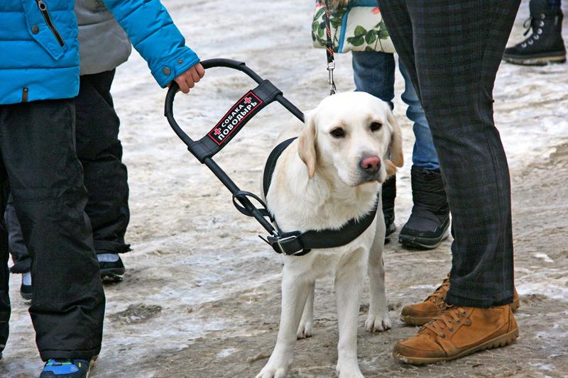 австрийская собака