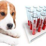 Какие есть группы крови у собак