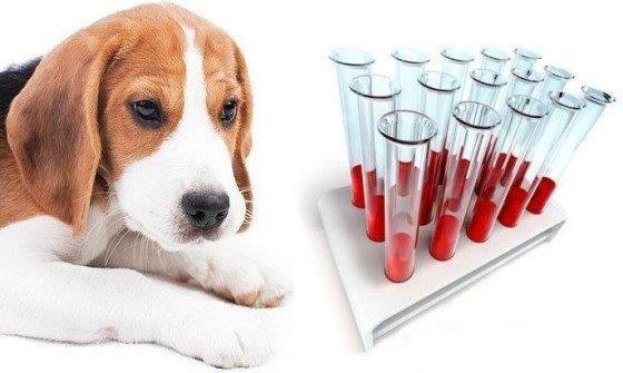группы крови у собак