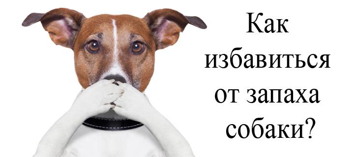 убираем собачий запах