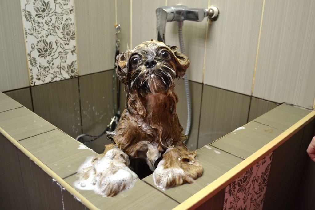 купание убирает запах животного