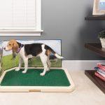 Обзор домашних туалетов для собак