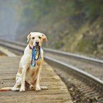 Пропала собака – что делать