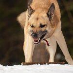 Десять видов агрессии у собак