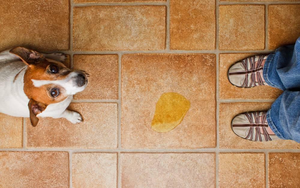 собака метит дом