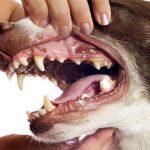 Как считать года у собаки – ответ ветеринара