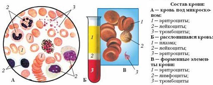 состав крови у животных