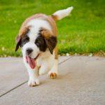 Почему собака тяжело дышит