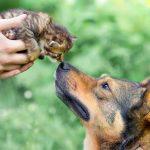Мир между кошкой и собакой – миф или реальность