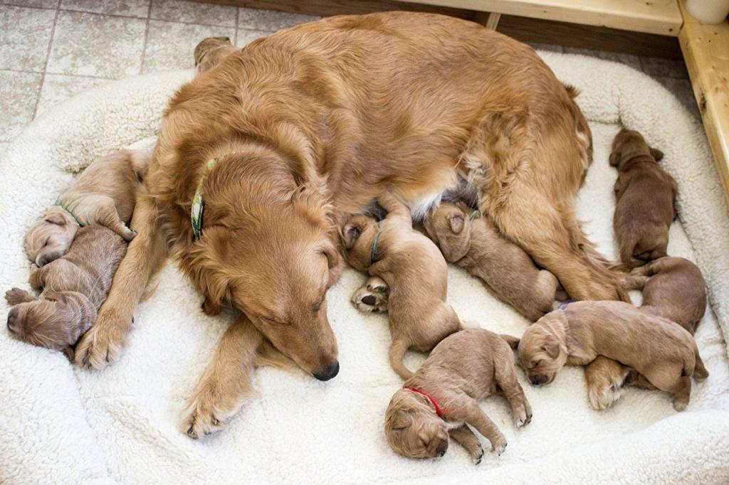 спальное место для собак
