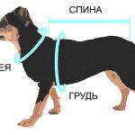 Определение размеров у собаки для приобретения одежды