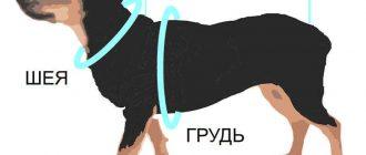 измерить собаку