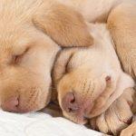 Сон и здоровье собаки