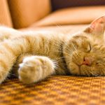 Почему кошка много спит