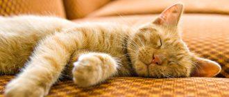 кошка много спит