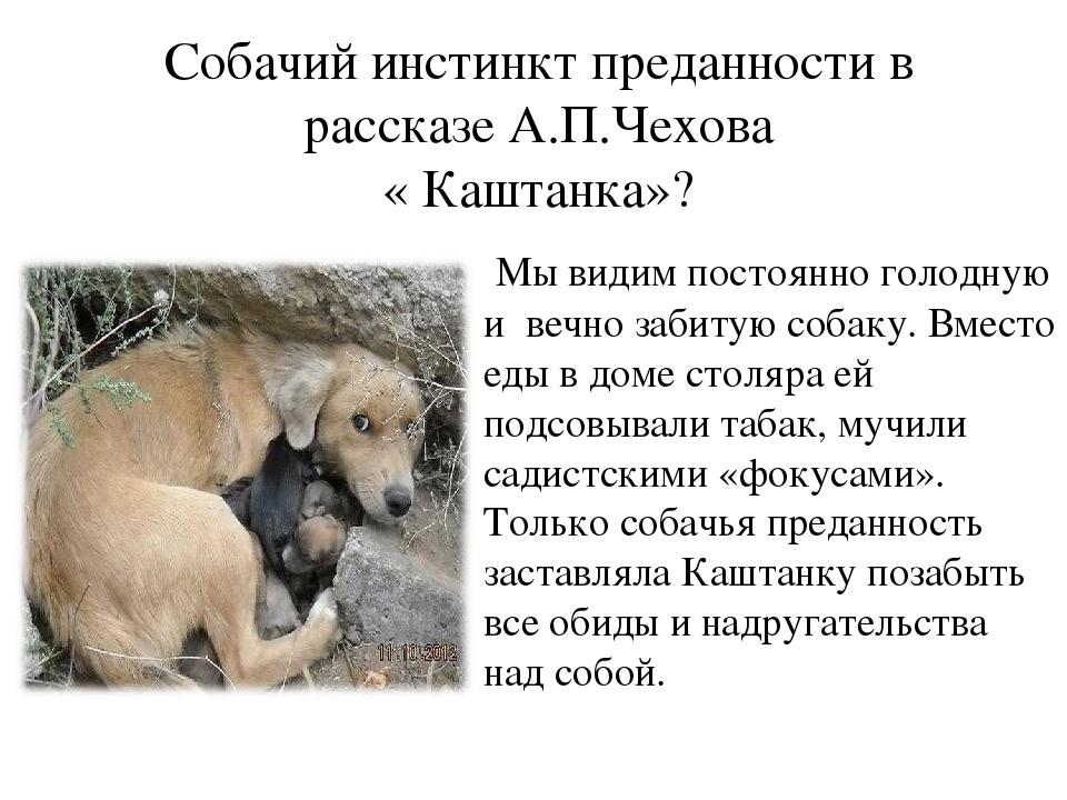 история о верности собак