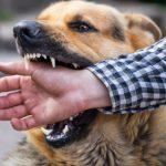 Почему собака кусается и как ее отучить от этого