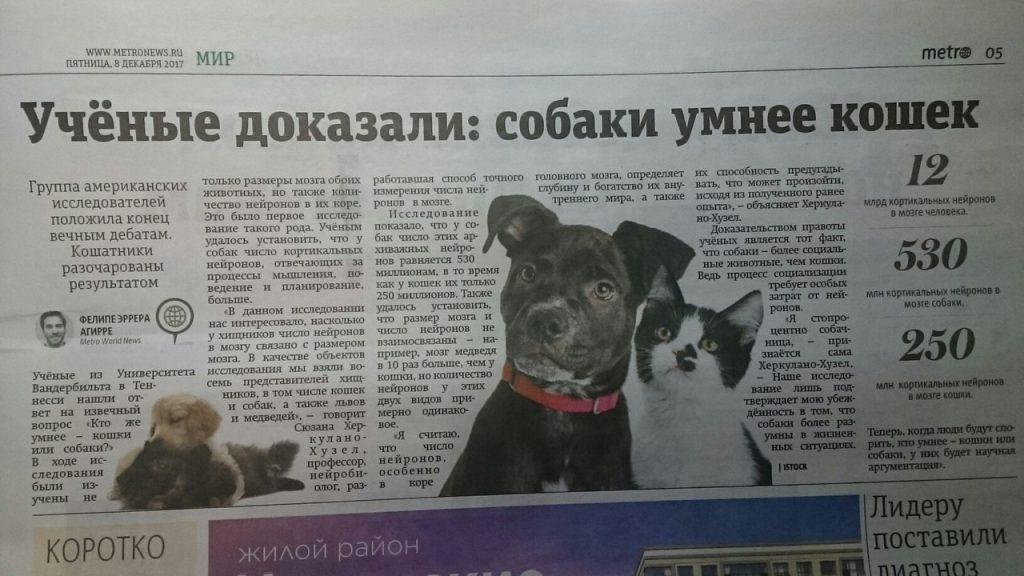 собаки умнее